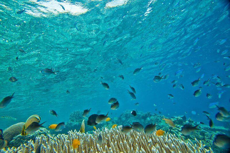 Johnny Cay Tour plus Natural Aquarium