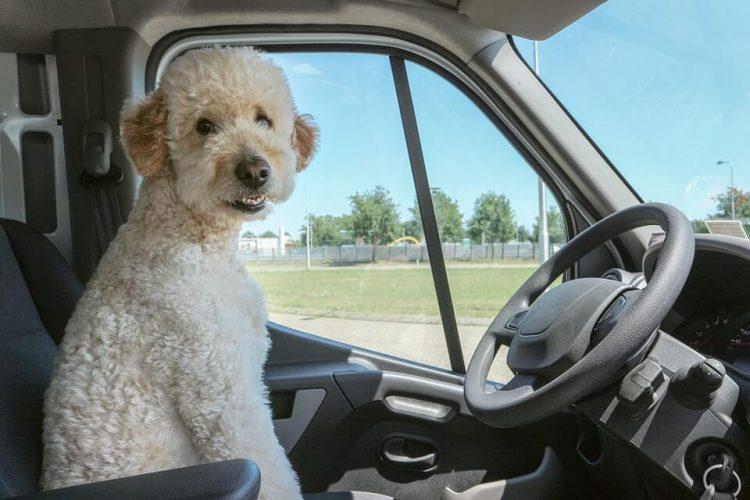 TRAVELING PET